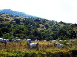 Il versante occidentale di Monte Capraro