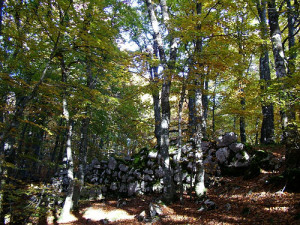 Mura ciclopiche di Monte Cavallerizzo